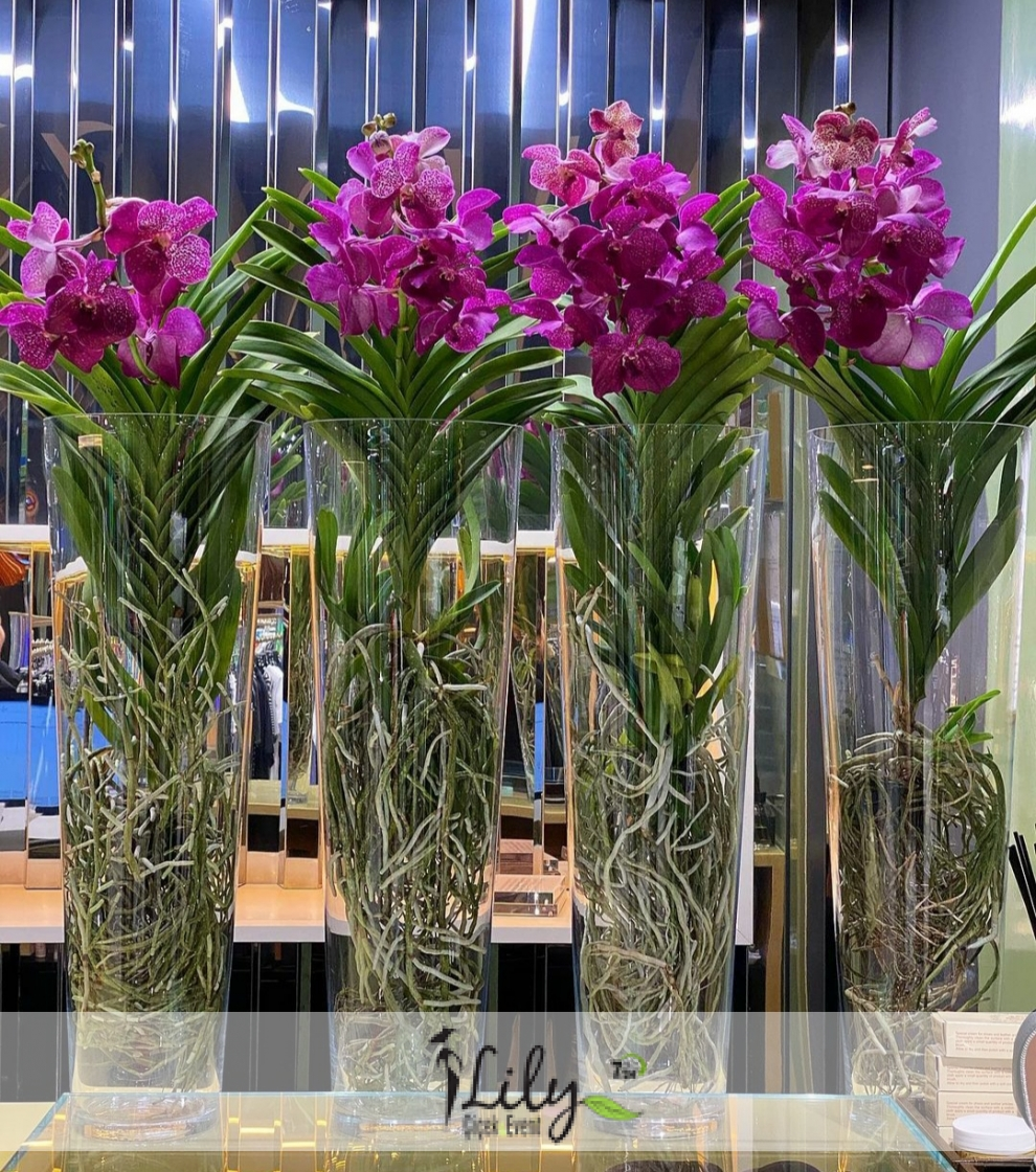 özel vanda orkidesi