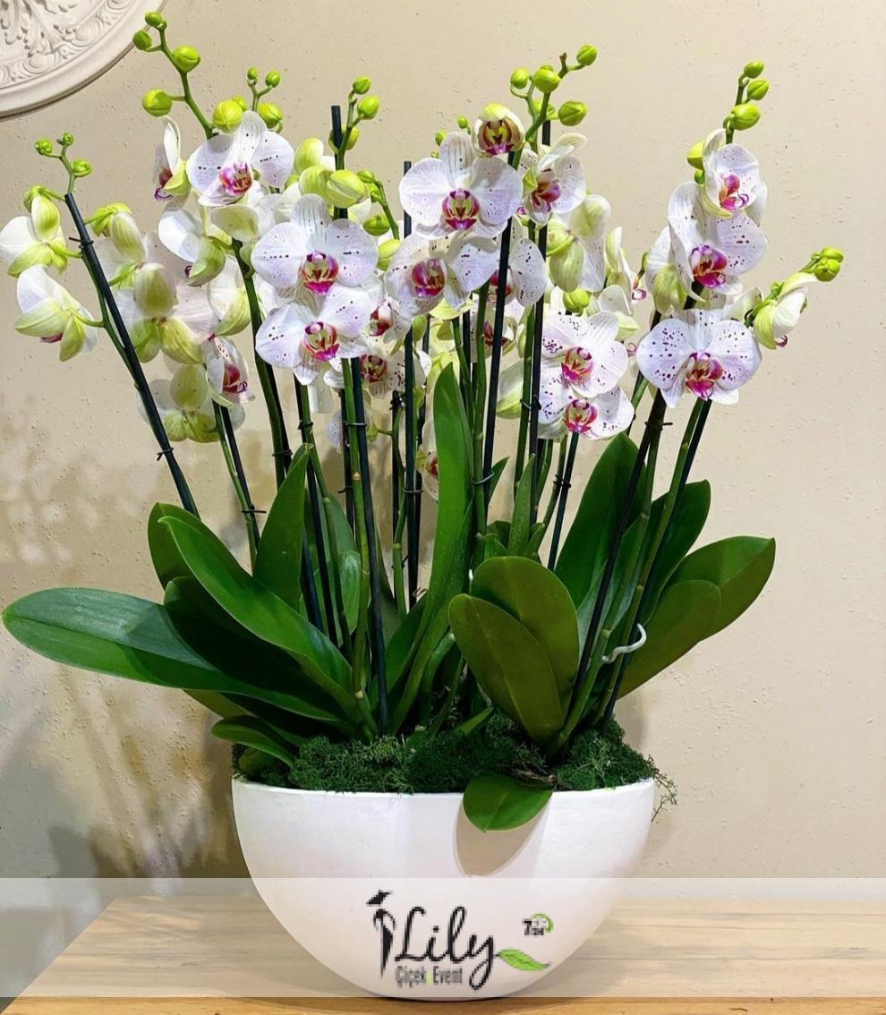 beyaz seramikte 10 dal orkide bahcesi