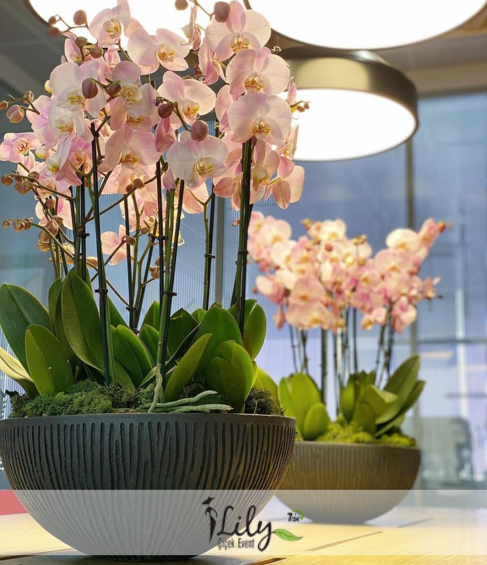 özel seramikte pembe orkideler