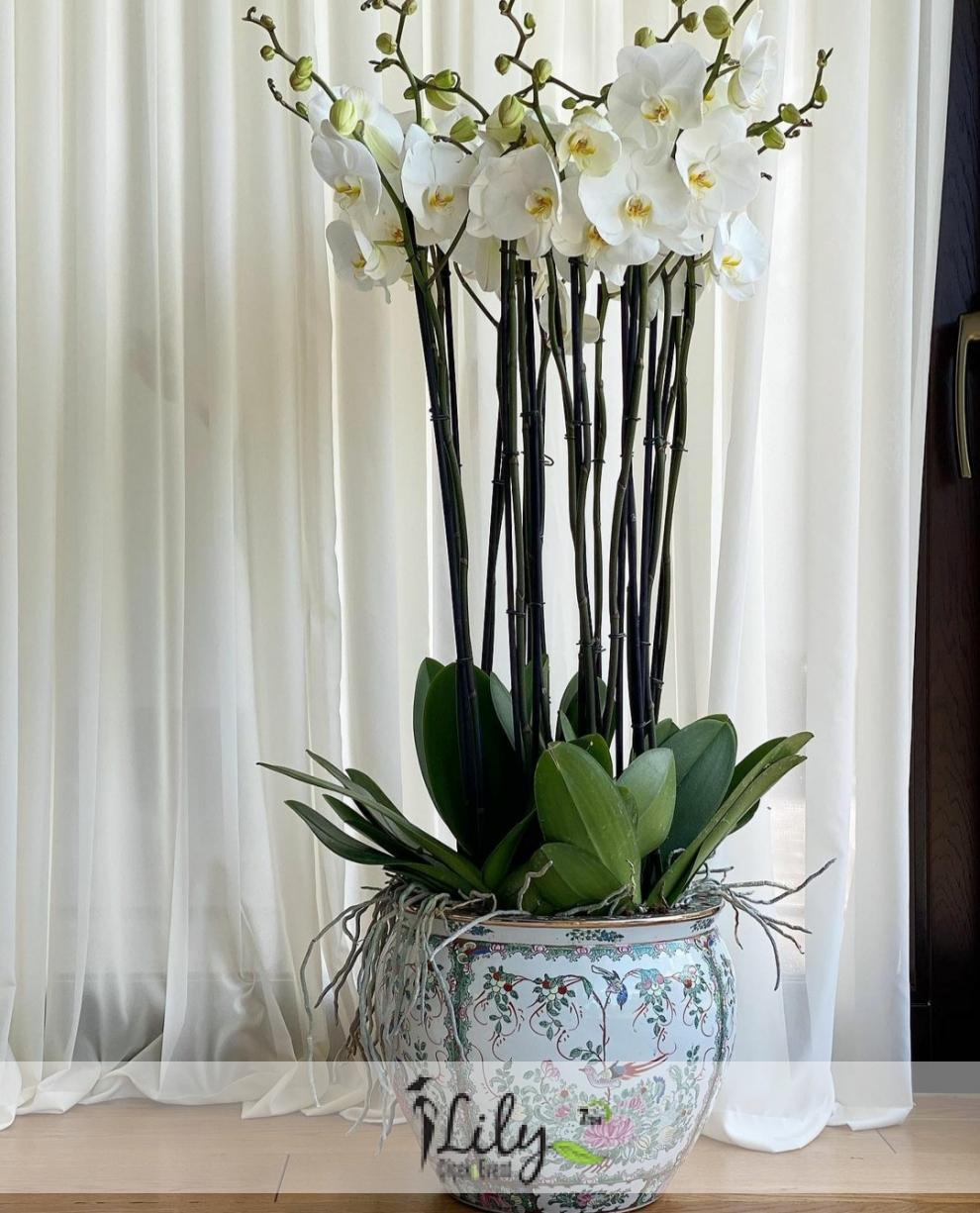 özel saksıda 8 dal beyaz orkide
