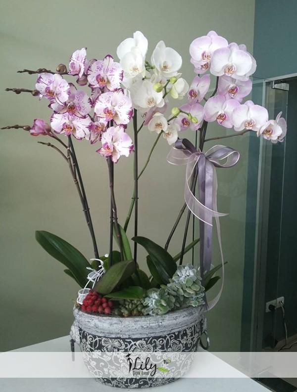 seramikte 6 dal orkide