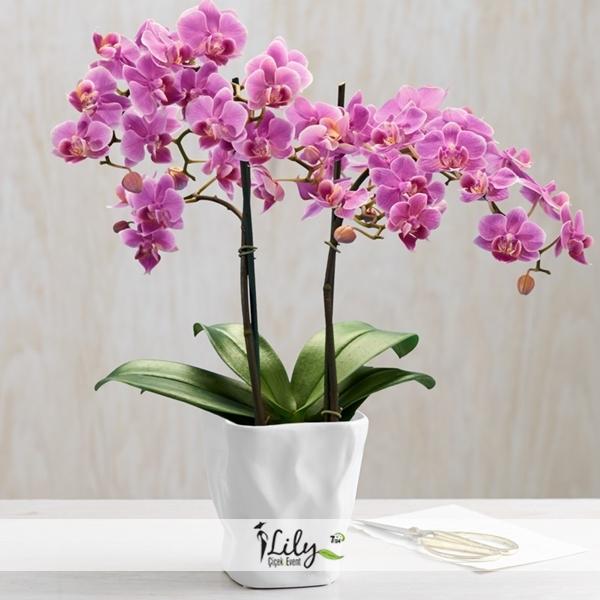 2 dallı özel orkide