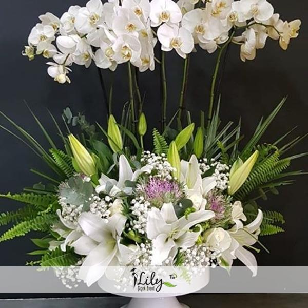 6 dal orkide ve lilyumlar
