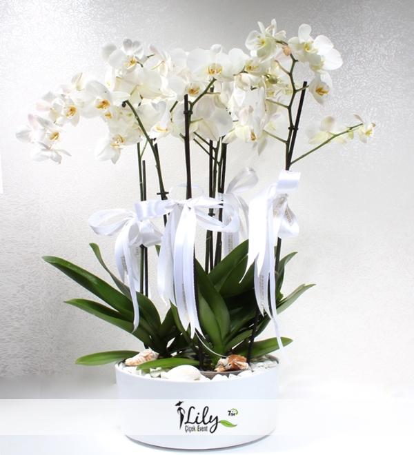 seramikte 6 dal beyaz orkide
