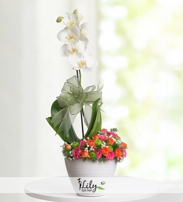 seramikte orkide ve mini güller
