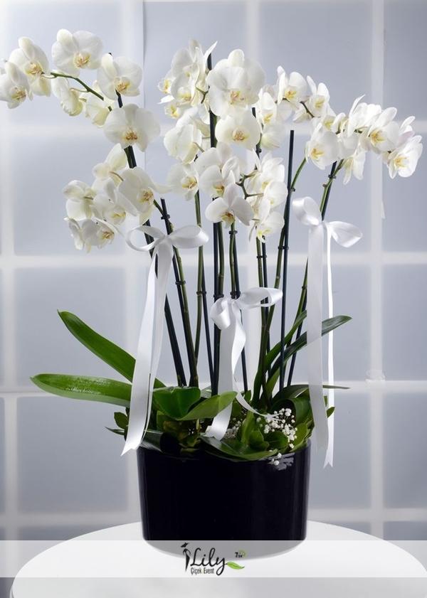 8 dal beyaz orkide tasarımı