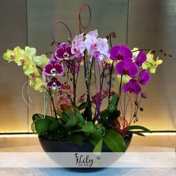 özel renkli vıp orkide bahçesi