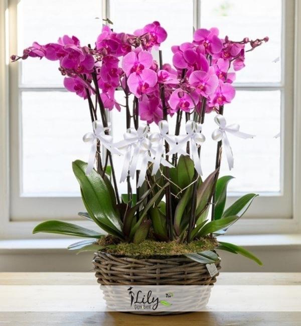 sepette 8 dal pembe orkide