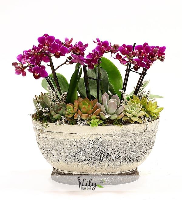 mini orkideler ve kaktüsler
