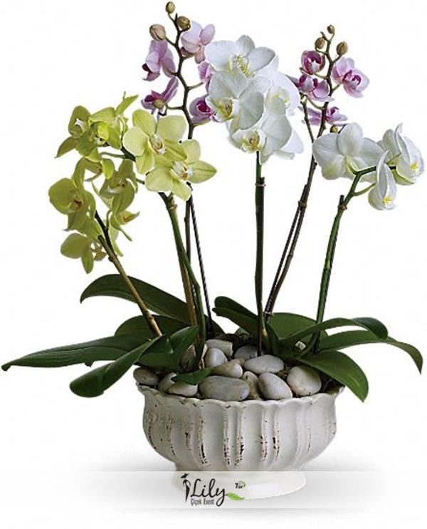 Orkide bahçesi VIP