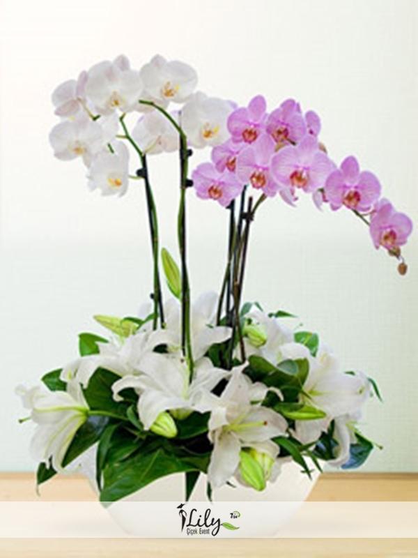 pembe beyaz orkide bahcesi
