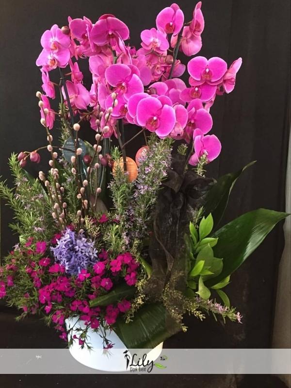 4 dallı pembe orkide bahçesi