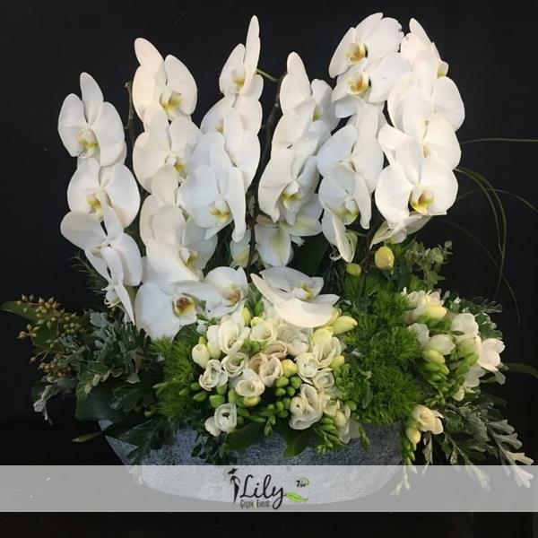 4 dallı özel beyaz orkide bahçesi