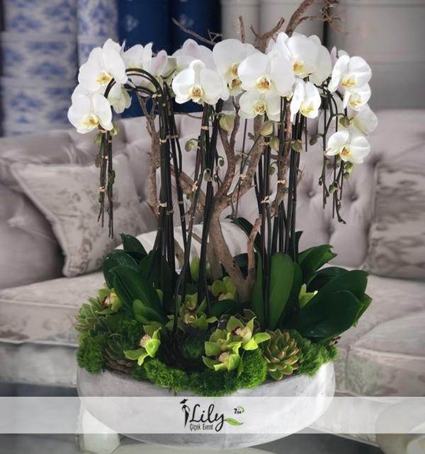 özel seramikte 8 dal orkide