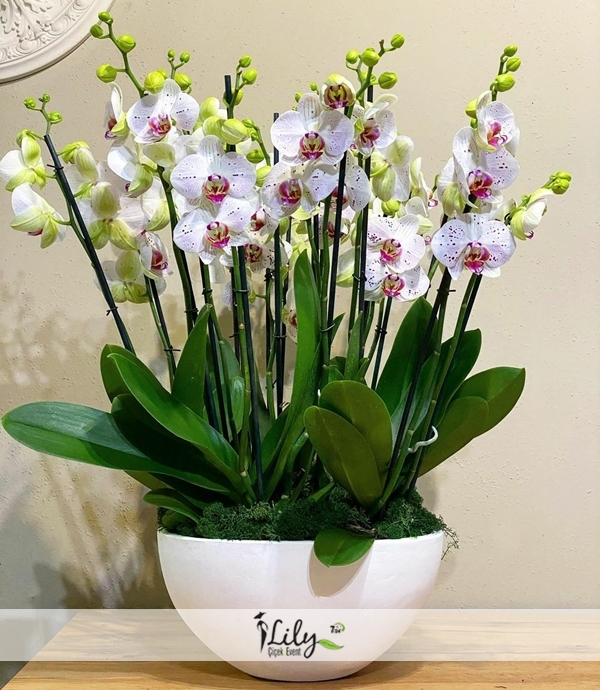 seramikte 10 dal orkide