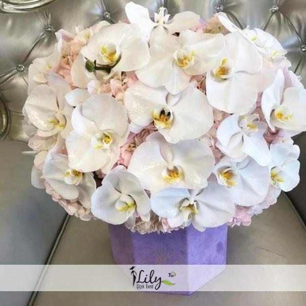 özel kutuda orkideler