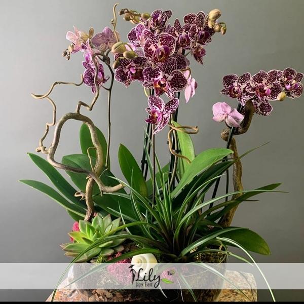 özel tasarım mor orkide
