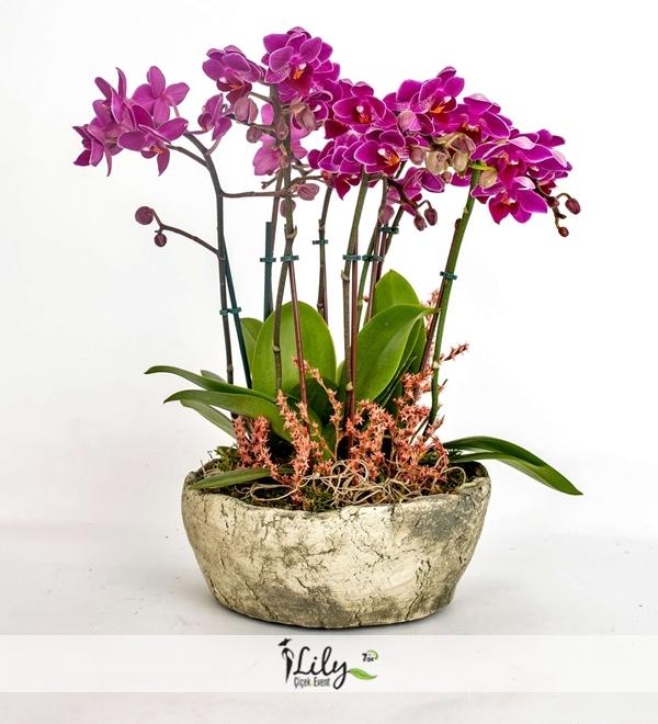 8 dal mor orkide bahcesi
