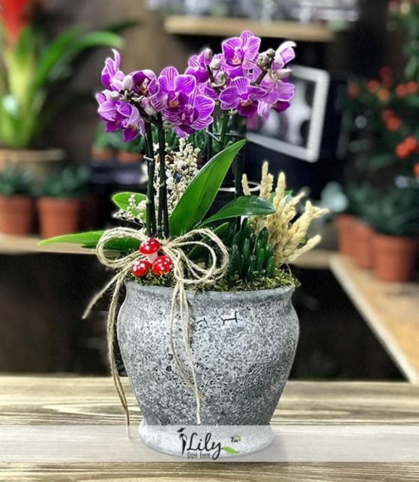 antik saksıda mini orkideler