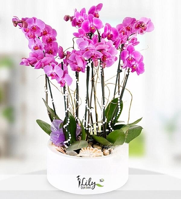 8 dal mor orkide bahçesi
