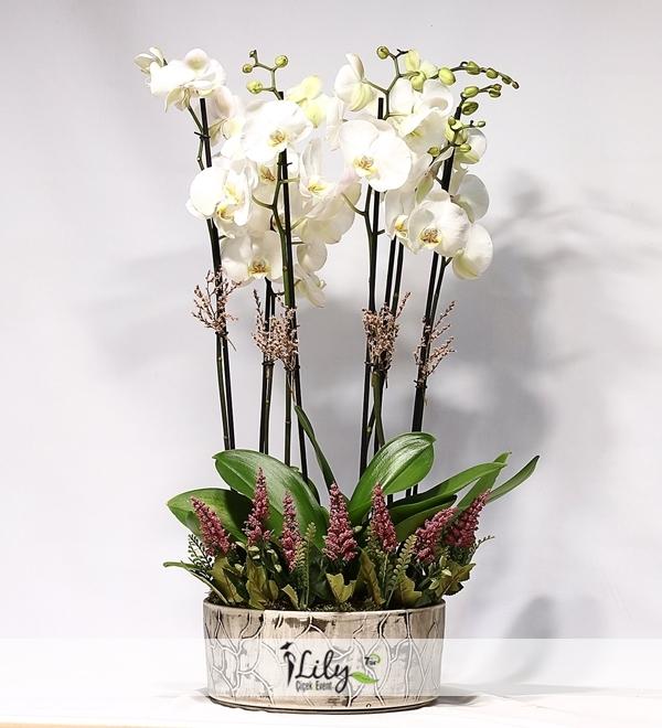 4 dal orkide