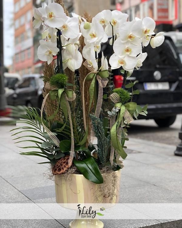 vip tasarım orkide bahçesi