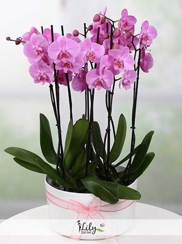 seramikte 8 dal pembe orkide