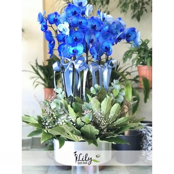 6 dallı mavi orkide bahçesi