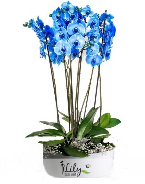 seramikte 6 dal mavi orkide