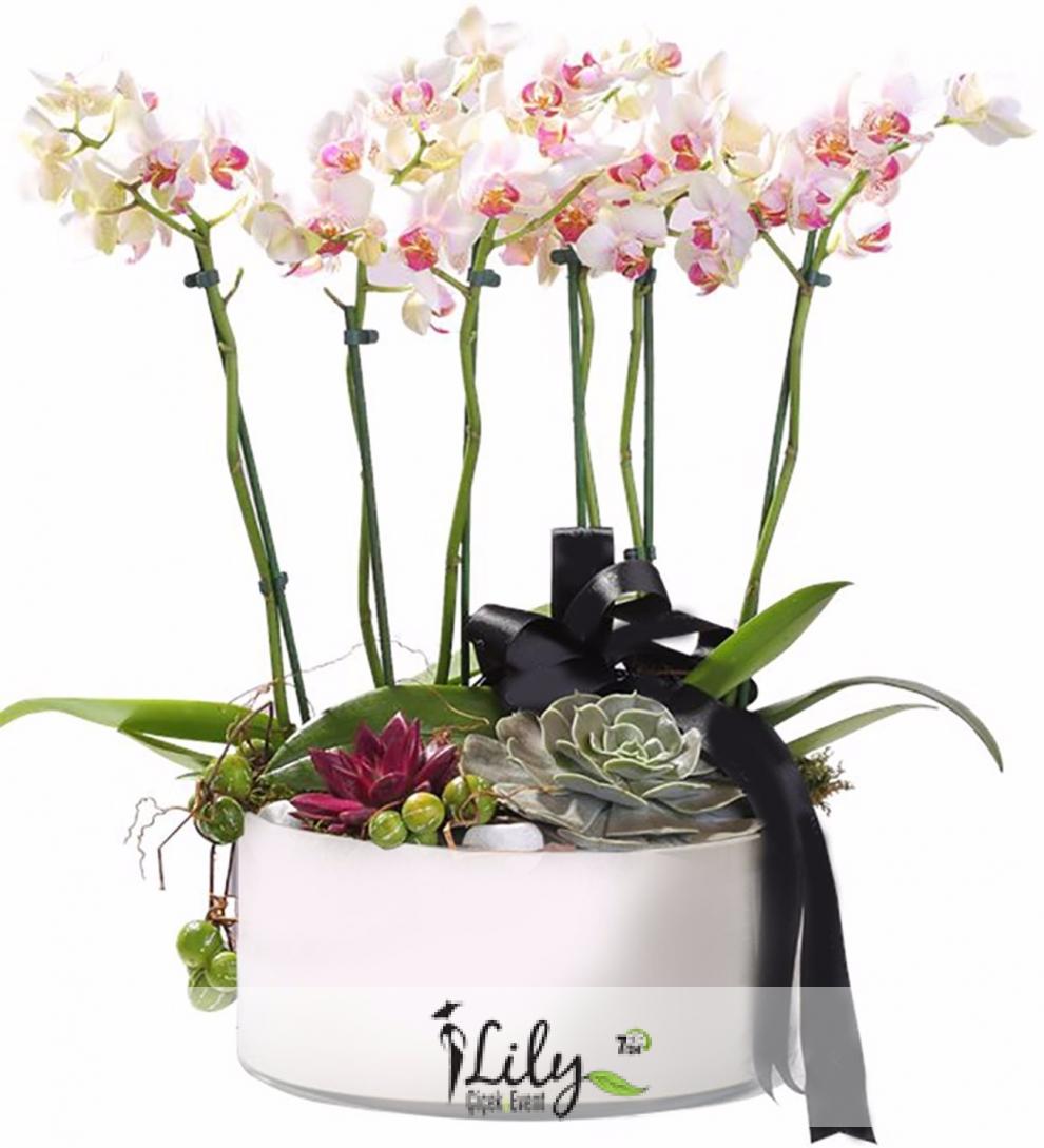 6 dal pembe orkide ve succulentler