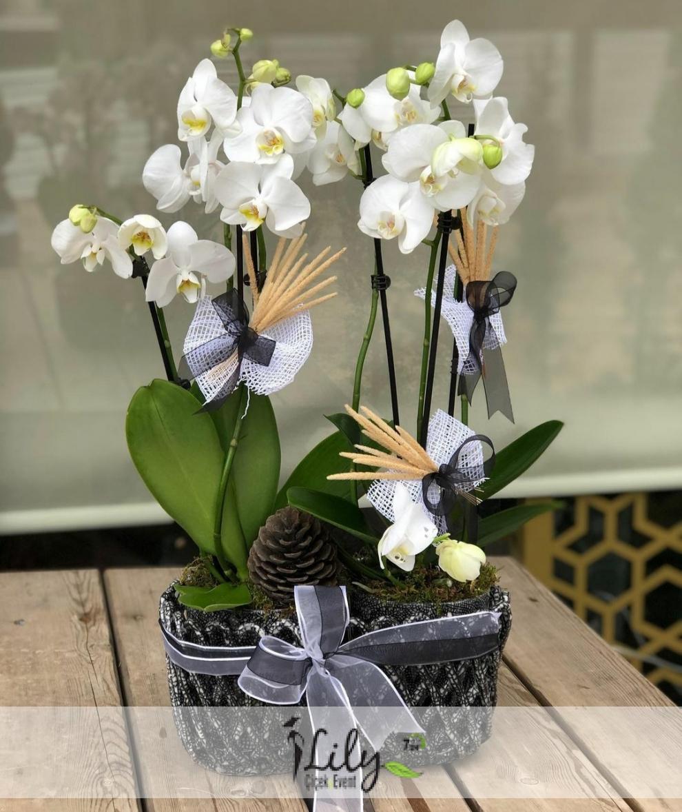 balkon seramikte 4 dal orkide
